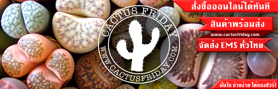 CACTUS FRIDAY